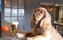 Say What?!: Scottish Brewery Offers 'Paw-ternity' Leave for Employees with Puppies