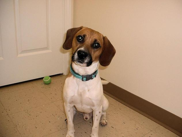 Jefferson County Adoptable Pet of the Week: Buddy