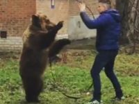 Say What?!: Russian Police Probe Viral Video of Man Walking Bear on a Leash