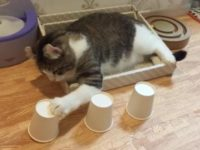 Say What?!: Talented Cat Excels at Cup and Ball Trick