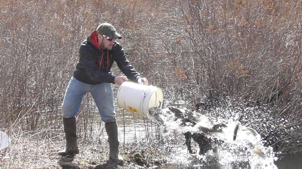 Pa trout stocking list amature housewives for Pa fish stocking