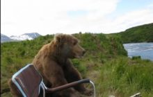Say What?!: Bear Sits Down Next to Alaska Photographer to Watch Nature