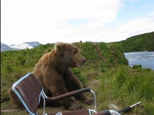 Bear-sits-down-next-to-Alaska-photographer-to-watch-nature