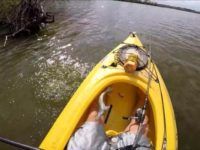 Say What?!: Fish Jumps Back into Kayak After Being Released