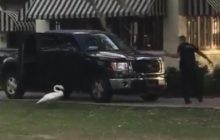 Say What?!: Swan Chases Florida Police Officer Around SUV