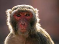 Say What?!: Monkeys Cause Chaos Inside Government Building in New Delhi