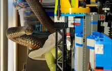Say What?!: Deadly Snake Found Wrapped Around Child's Lego Set