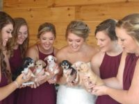 Say What?!: Iowa Bride Replaced Wedding Bouquets with Puppies