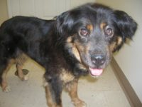 Jefferson County Adoptable Pet of the Week: Candy