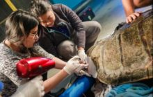 Say What?!: Injured Sea Turtle's Shell Gap Filled with 3D-Printed Brace
