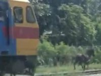 Say What?!: Escaped Pony Outruns Train