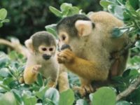 Say What?!: Monkeys Foil Zoo Theft Attempt