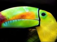 Say What?!: Bird Keepers Seeking Escaped Toucan