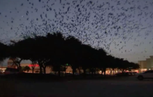 Say What?!: Old Navy Store Swarmed by Birds