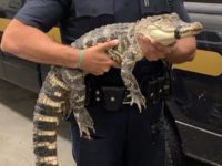 Say What?!: 'Sickly' Looking Exotic Animals Seized at Comic Con