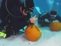 Say What?!: Underwater Pumpkin Carving Contest Held in Florida