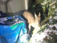 Say What?!: Firefighters Rescue Deer Stuck in Backyard Pool
