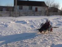 Say What?!: Dad Creates Snowmobile from a Sled and Two Leaf Blowers