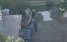 Say What?!: Horse Hoisted to Safety After Getting Stuck in Dumpster