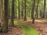 PA Great Outdoors: Walk Cook Forest's Emerald Path
