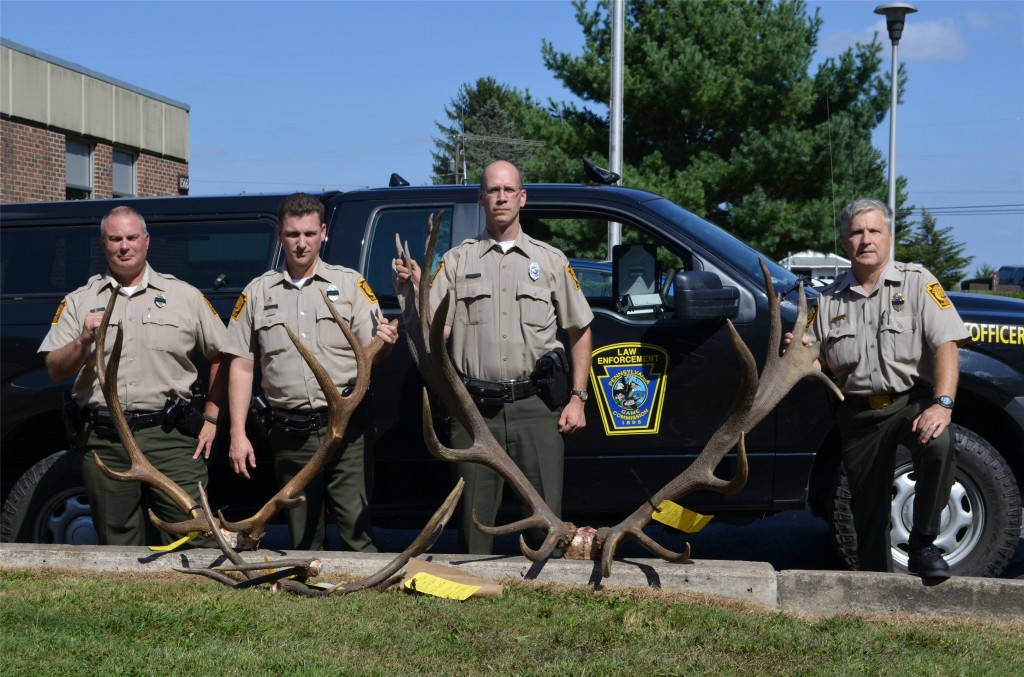 Left to right: WCOs Dan Murray, Dave Stewart, and Mark Gritzer, and Northcentral Region Law Enforcement Supervisor Rick Macklem pose with the antlers seized in the poaching investigation that has led to charges against three Centre County men. The 10- by 9-point rack at right initially was measured at 432 7/8 inches, based on standards set forth by the Boone & Crockett big-game scoring program. Only two bulls legally harvested in Pennsylvania have scored higher. The rack from the 5-by-7 bull is at left, and the sawed-off antlers from the 4-by-5 can be seen in front of it.