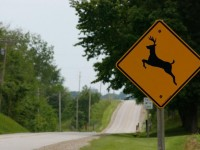 Pa. Drivers Rank 2nd Among Most Likely To Hit Deer