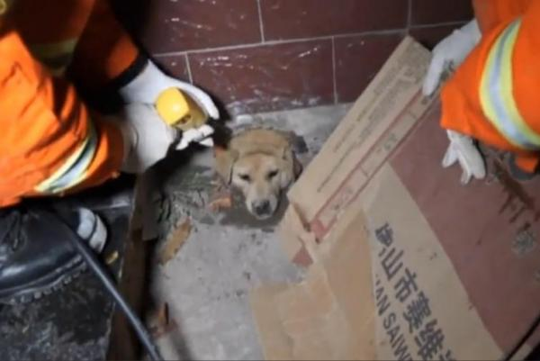 Firefighters-rescue-dog-with-head-stuck-in-wall