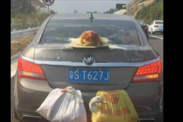 Transport-fowl-Ducks-chicken-ride-in-bags-outside-of-car
