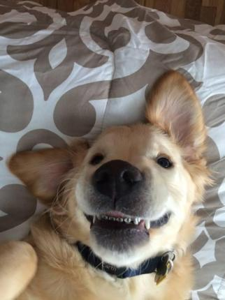 Puppy-shows-off-new-braces-after-trip-to-doggie-dentist