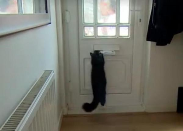 UK-Royal-Mail-threatens-to-stop-delivering-to-man-after-cat-attacks