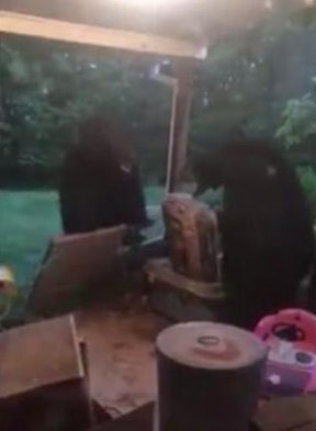 Virginia-woman-wakes-to-bear-fight-on-her-back-porch
