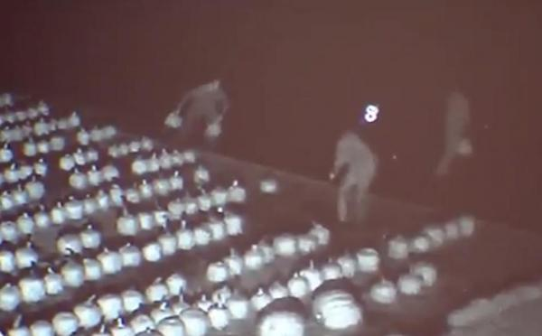 thieves-steal-200-pumpkins-from-new-jersey-farm
