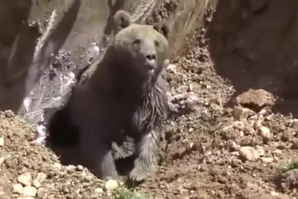 winnie-the-poo-angry-bear-rescued-from-septic-tank