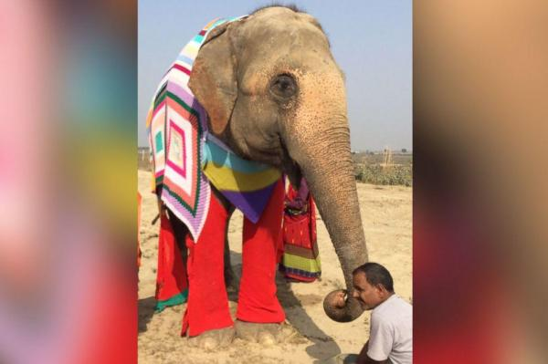 Rescued-elephants-fitted-with-giant-colorful-sweaters-at-India-sanctuary