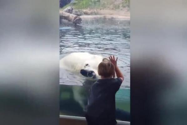 Polar-bear-tries-to-attack-5-year-old-through-glass-wall-at-zoo