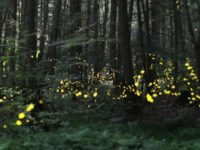 Firefly Season in the PA Great Outdoors