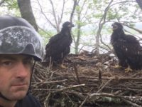 PA Game Commission Releases Eagles into Wild