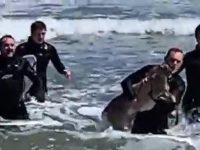 Say What?!: Surfers Rescue Struggling Deer at New Jersey Beach