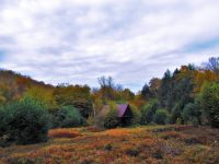 PA Great Outdoors: A Thanksgiving Walk in the Woods