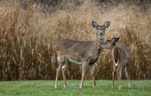 Newly Detected CWD-Positive in Jefferson County Leads to DMA3 Expansion and a New DMA
