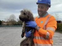 Say What?!: Dog Rescued From Sewer After Chasing Rat Up Outtake Pipe