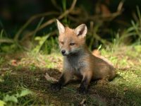 Watch Wildlife Round the Clock From Home