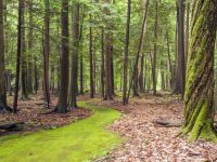 Pennsylvania Great Outdoors: Cook Forest for Couples