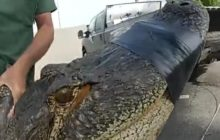 Say What?!: 10-Foot Alligator Discovered Under Parked Car