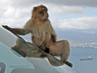 Say What?!: German Police Searching for 20-25 Escaped Monkeys