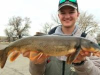 Say What?!: Montana Angler's 3.45-Pound Longnose Sucker Breaks State Record