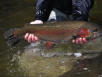 Statewide Opening Day of Trout Season is this Saturday, April 3
