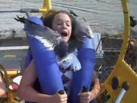 Say What?! Girl on Jersey Shore Ride Collides Face-First With Seagull