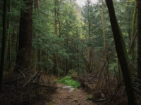Friends of Cook Forest Series: Mohawk Loop Ramble Set for Saturday