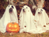 Halloween Happenings: Trick-or Treat Times, Spooky Events, and More